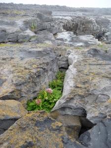 Inselpflanzen